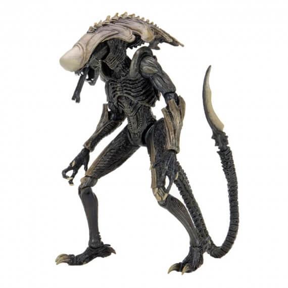 Figurine Alien VS Predator - Chrysalis Alien 18cm